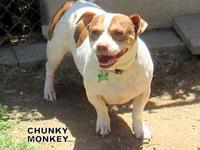 Chunky Monkey's story You can fill out an adoption
