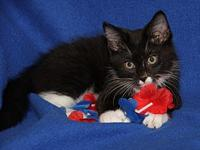 My story Chunky Monkey is a handsome male kitten who