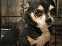 Churro's story PAW Animal Shelter is a high intake No