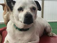 Chuwy's story FOSTERED IN: Chicago, IL 60618 AGE: 5