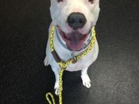 Chyna's story This sweet girl is Chyna, a 2 year old