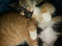 My story Meet Eddie & Chyna, these two adorable kittens