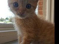 CiCi's story All of our kitties are tested, fully