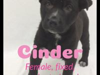 For more info about Cinder please text us at    If you