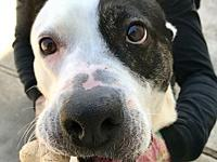 Cinder's story **This dog is with Corridor Rescue in