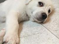 Cinderella - - Adoption Pendi's story Don't let the