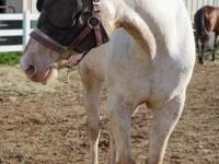 Cindy is an approximately 15 year old female appaloosa.