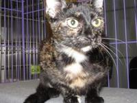 CINDY's story Lovely Cindy is a torti girl with just a