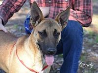 Cindy's story Cindy is a sweet girl hoping to find her