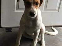 Cindy's story Cindy - terrier mix, female, 45 lb, 2 yrs
