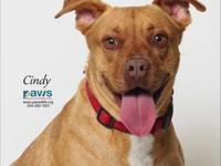 Cindy's story Cindy is a longtime PAWS resident. She