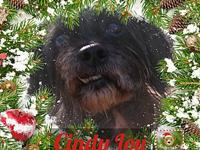 Cindy Lou's story Cindy Lou is a favorite at the rescue