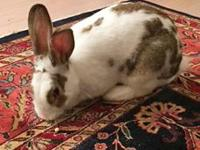 Beautiful, friendly and fun-loving, Cinna-Bunny is all