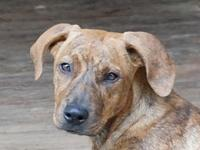Cinnamon B's story Please contact Vickie