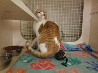 Cinnamon's story Cinnamon is very affectionate and