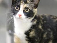 Cinnamon's story Meow! My name is Cinnamon and I am