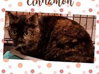 Cinnamon's story Cinnamon is a beautiful Tortoiseshell