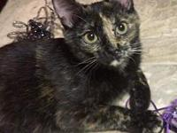 Cinnamon Female Kitten's story My name is Cinnamon and