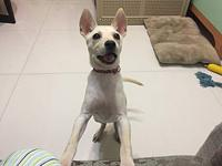 Cira's story Cira is a rescue from Taiwan. She is