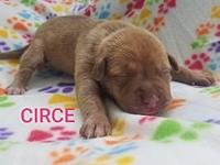 Circe's story Circe is a female pup from Joy aka Big