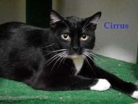Cirrus's story Cirrus is a   black/white