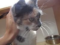 Cissy's story Cissy is a loving lady looking for her