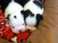 New puppies are increased in my home and will have both