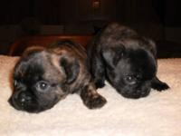 We have 2 bug puppies availible. 1 male and 1 female.