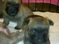 5 females & 3 males Ready April 8, 2015 with first
