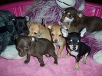 i have 8 puppies..5 are still available... I have all
