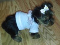 Beautiful yorkie puppy looking for a forever home. She