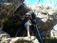 I have a ckc german rottweiler male he is housebroke