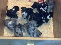 *UPDATE* Pups are now 4 weeks old and growing well,