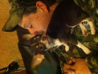 Five month old Chihuahua puppy male rare chocolate and