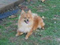I have a 6 month aged guy Pomeranian. Around day on