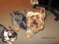 I HAVE A MALE YORKIE 4-4.5 LBS SMALL IN STATURE SHORT
