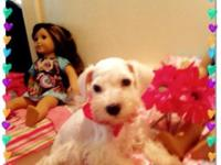 I have 2 female Schnauzer puppies prepared for a new