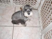 I have 4 mini schnauzers. Ckc registrations. Will