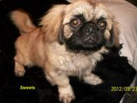 CKC Pekingese,these were born 12/19/11 and is ready to