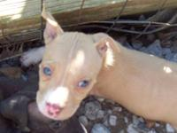 we have 10 pitbull pups. they are 6 weeks old . we have