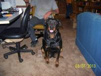 I HAVE CKC GERMAN ROTTWEILER PUPPIES THAT WAS BORN ON