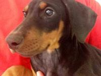 I have a Black and Tan female Doberman shes up to date