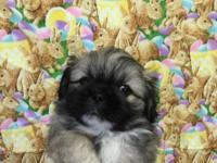 CKC REG. PEKINGESE PUPS, I HAVE 1 FEMALE AND 2 MALES,
