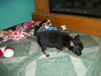 we have 2 litters of sweet little babies males and