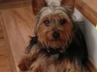 I have a male Yorkie for sale. He is CKC registered. I
