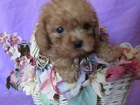 Beautiful and playful 8 week old puppies 2 females 1