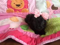 """Kindly meet """"Snickers""""-- she is such a doll infant!"""