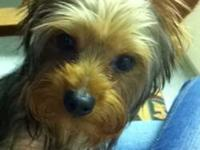 I have a CKC registered yorkie I am looking to rehome.