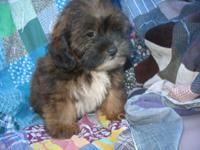 'Roxy' is so soft, fluffy and loves to play! She comes