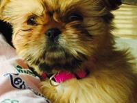 We have a small female shih tzu that we are rehoming.